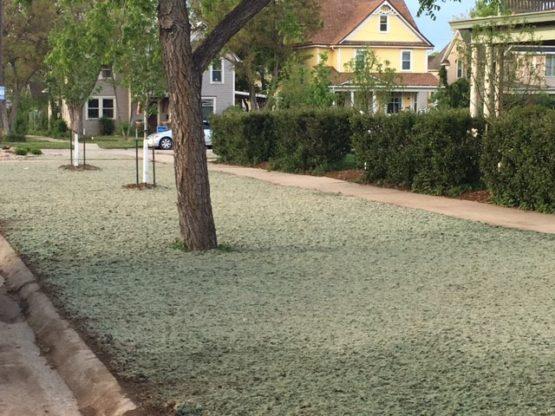 Sprinkler Systems & Landscaping